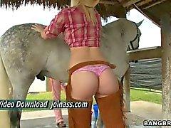Neuk partij met 3 grote ezels