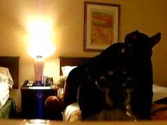 Escuro Dog Hotel